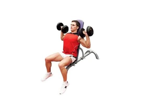 Жим гантелей сидя техника выполнения, работающие мышцы, ошибки