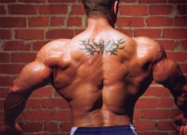 функции широчайшей мышцы спины