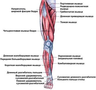 Как правильно накачать ноги