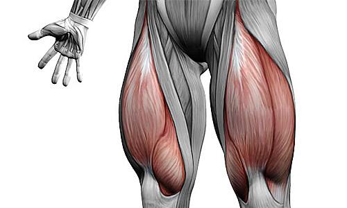 Четырехглавная мышца бедра